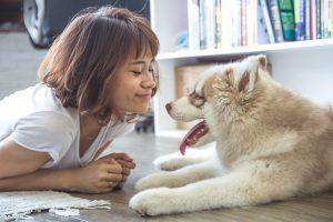 老犬とコミュニケーション