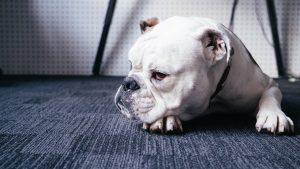 愛犬の太る原因が犬にある場合