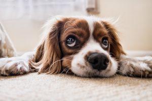 愛犬の肥満原因が飼い主によるもの