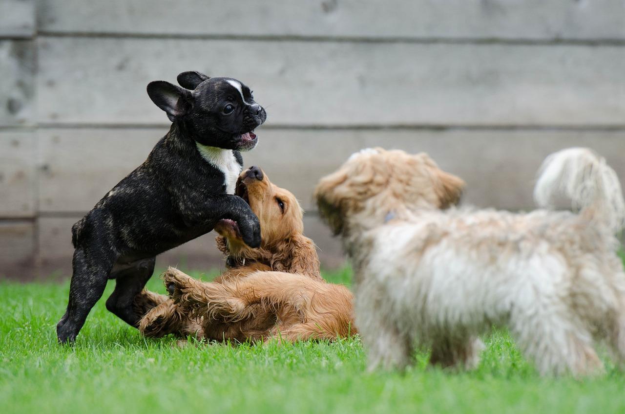 犬のしつけ 問題行動